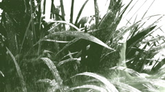 Closeup on a plant under rain in a double exposure effect with ink. Stock Footage