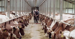 Farming personel at work sweeping a barn with cows, agriculture Europe Stock Footage