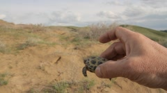 Hatchling turtles sand in man hands - stock footage