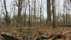 Hyperlapse POV Moving Through Woods over Stream Bed Stock Footage