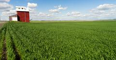 Red Grain Elevator Blue Skies Agriculture Green Crops Field Stock Photos