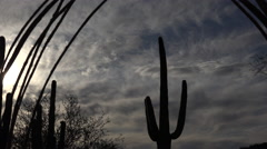 Dusk Light Creates Dramatic Arizona Desert Silhouetted Saguaro Cactus Landscape Stock Footage