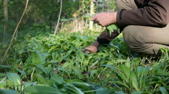 Man pickling wild garlic Stock Footage