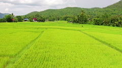 Aerial shot rice field - stock footage