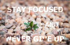 Stay focused and never give up inspirational quote Kuvituskuvat