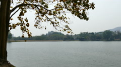 tree at waterside of the lake in park - stock footage