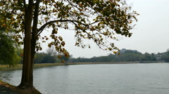 Tree at waterside of the lake in park Stock Footage