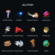 Stock Illustration of Jellyfish vector set in flat style design. Different kind of underwater life