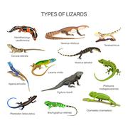 Lizards vector set in flat style design. Different kind of lizard reptile - stock illustration