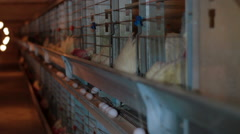 Chicken eggs eating in factory Stock Footage