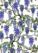 blue wisteria tree - stock illustration
