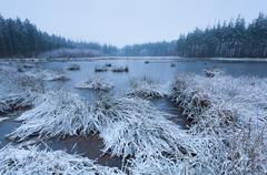Forest swamp in winter Stock Photos