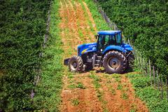Blue tractor among vineyards during summertime - stock photo