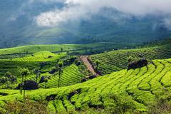 Green tea plantations in Munnar, Kerala, India - stock photo