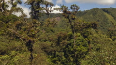 Pan along montane rainforest with emergent trees Stock Footage