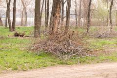 Heap of Cut Tree Branches Stock Photos