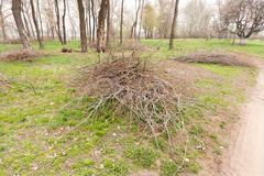 Heap of Cut Tree Branches - stock photo