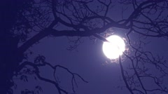 Full moon light through branches of an old oak tree Stock Footage