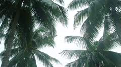 Tropical Palm Trees Sway in the Wind under an Overcast Sky Stock Footage
