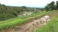 View over ricefield - stock footage