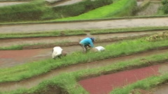 People working on ricefield - stock footage