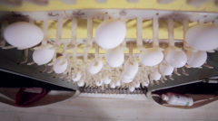 Production of eggs in huge the poultry farm Stock Footage