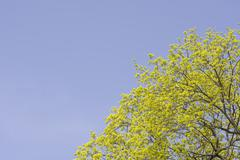 Budding Tree in Spring - stock photo