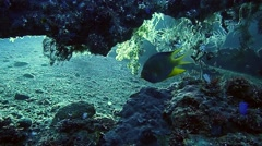 Exotic fish swimming in a rock crevice Stock Footage