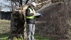 Worker checking documentation near fallen tree Stock Footage