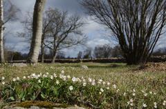 Springtime in the countryside Stock Photos