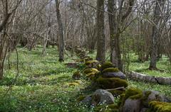 Mossy stone wall at spring - stock photo