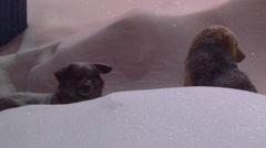 Two dogs sitting frozen in the deep snow in the evening Stock Footage