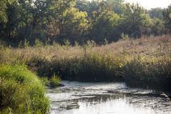 still river - stock photo