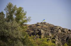 ukrainian flag in mountain - stock photo