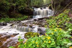Spring Buttercups at Wagner Falls - Munising Michigan Stock Photos
