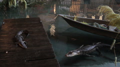 Alligators in bayou Stock Footage