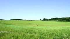 Scenic shot of field, Farm, and sky  Stock Footage