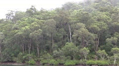 Eucalyptus Rainforest Trees in Fog Near Coast in Australia Stock Footage