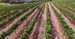 Drone footage of wine farm Stock Footage