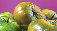 Raf Tomatoes isolated rotating on pink/purple background - stock footage
