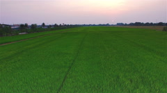 green rice farm field with sun at twilight time and pathway in Thailand; 4K - stock footage