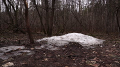 Nature, spring, forest, snow is meltingб dolly shoot. Stock Footage