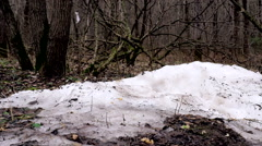 Nature, spring, forest, snow is melting, dolly shoot. Stock Footage