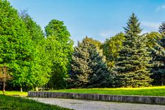 Stock Photo of old city park with chestnut and conifer trees