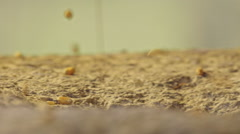 Macro shot of grain dropping onto millstone - stock footage