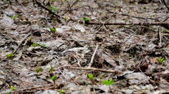 Nature, spring, forest, dry leafes, cloudy, rainly, dolly track shoot. Stock Footage