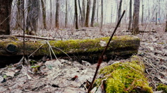 Nature, wooden log lying on the ground covered with moss. Stock Footage