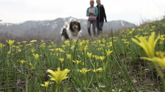 Walk on the flower meadow Stock Footage