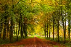 Autumn Avenue of Trees Stock Photos