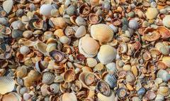 Many sea shells on a beach summer background. Stock Photos